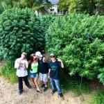 TGA Seeds and Mendo Dope Drop New CD About Growing Connoisseur Marijuana