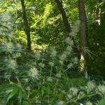 Outdoor Marijuana Growing Master Guide