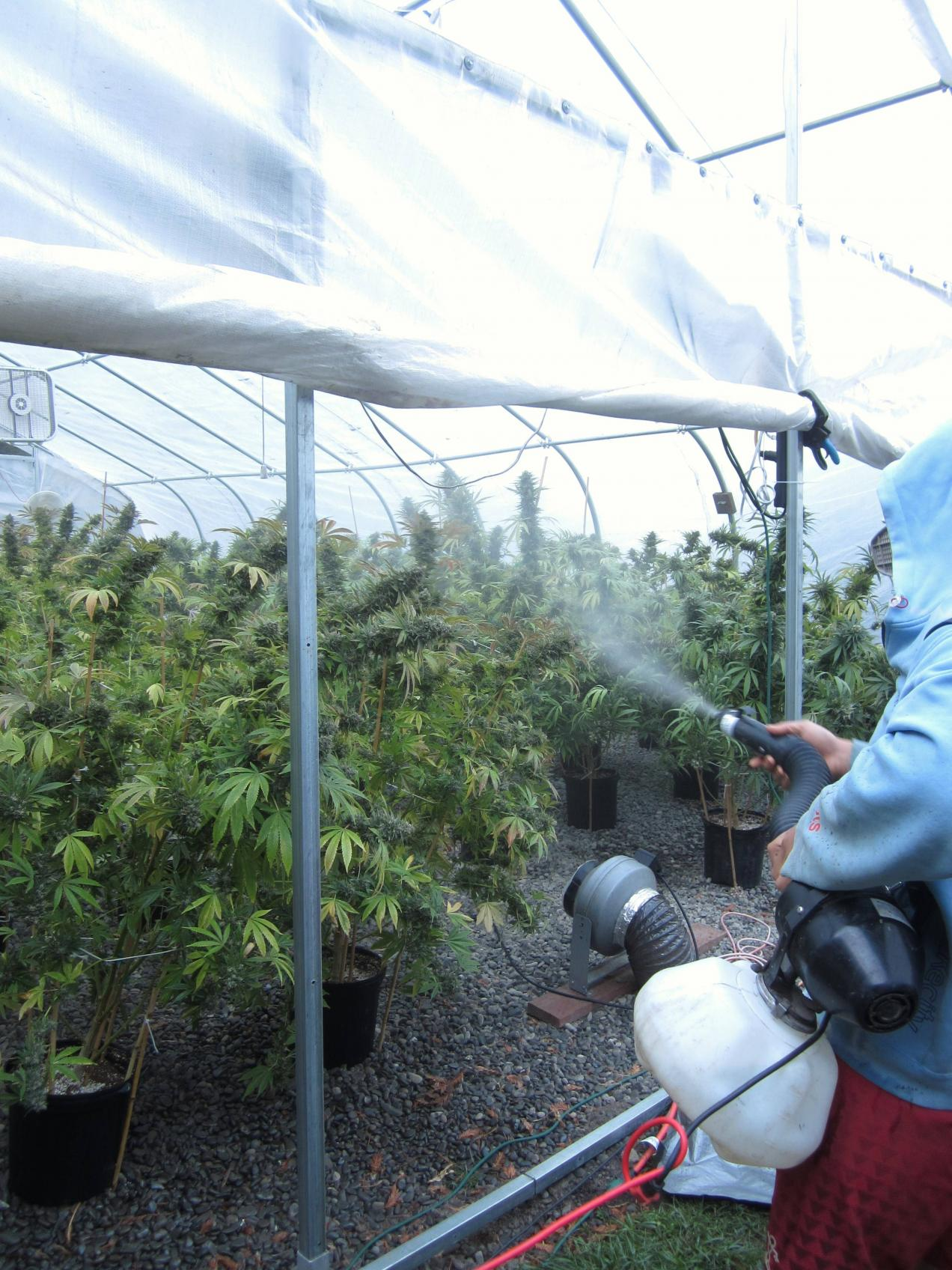 grow tent spraying for pests and diseases