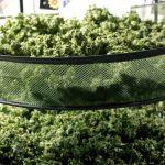 Growing Marijuana: Drying & Curing Marijuana for Perfect Buds