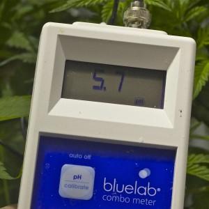 Marijuana Base Nutrients
