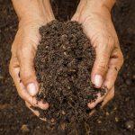 Marijuana Supersoil Recipe & Tips
