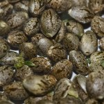 Marijuana Seed Banks and Breeders: Cannabis Seeds Primer