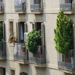 marijuana strains