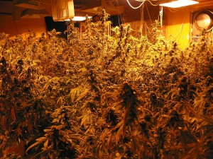 Boosting Tips For Marijuana Growers