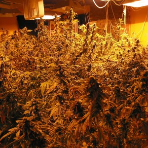 Boosting Tips For Marijuana Growers