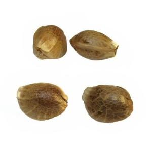Marijuana Seeds