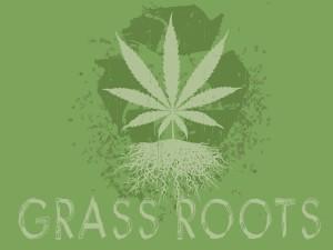 Marijuana Hydroponics Roots
