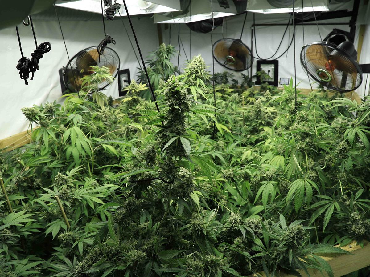 Marijuana Hydroponics Systems