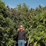 Marijuana Growing Guru Jorge Cervantes Expert Cannabis Cultivation Videos