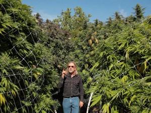 Marijuana Jorge Cervantes