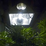 Marijuana Grow Room Hydroponics Reflectors & Hoods Guide