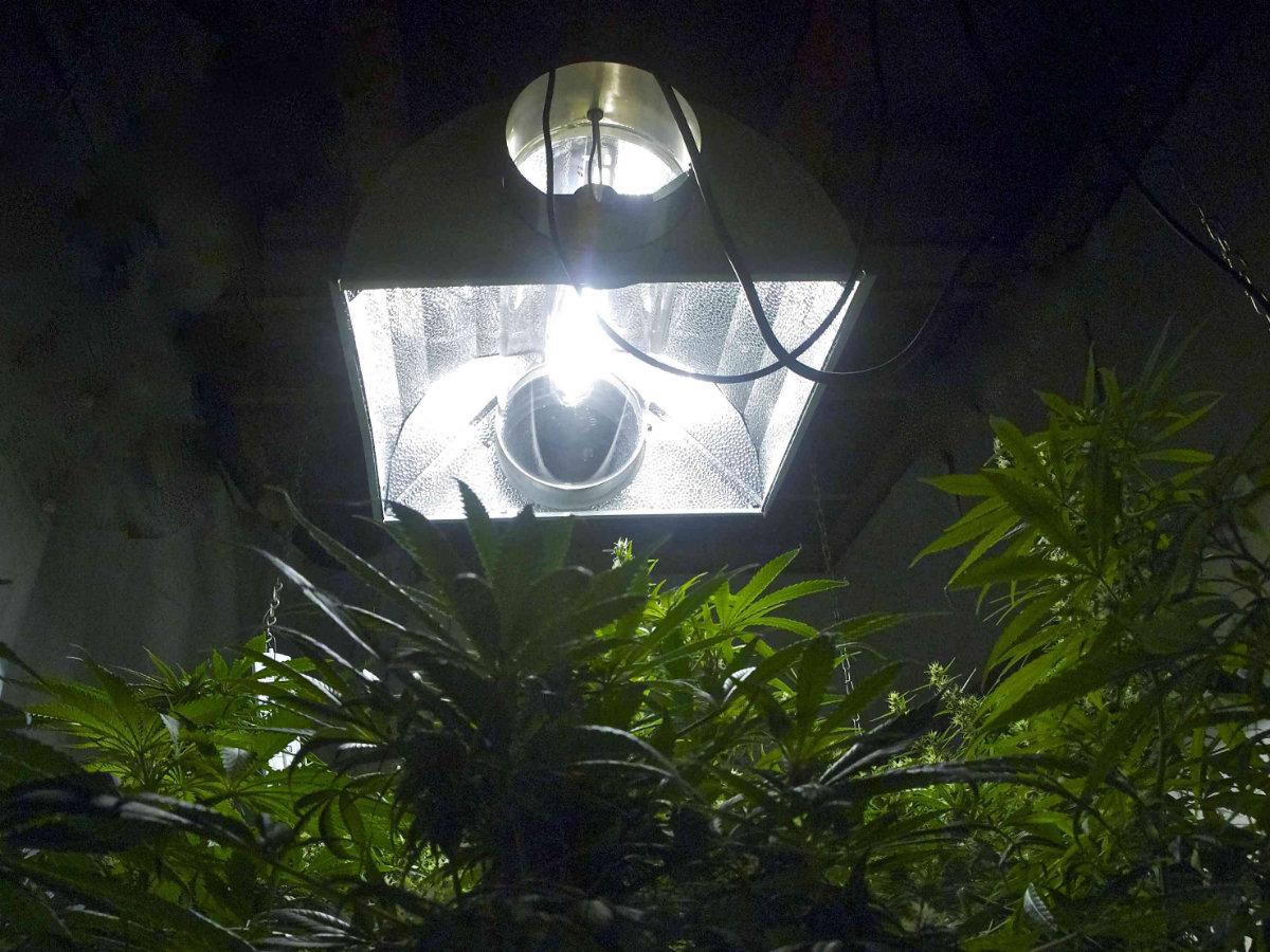Marijuana -Reflectors