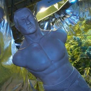 Marijuana Grow Room Man Cave