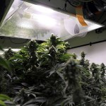 5 Ways to Make Marijuana Growing Fun Again