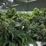 Ohio Issue 3 Marijuana Legalization Failure: Ohioans Just Say No to Corporate Marijuana