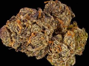New Marijuana Strains