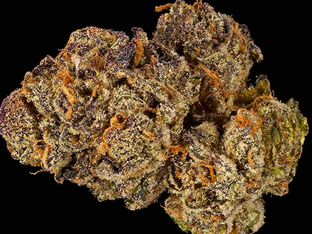 New Marijuana Strains