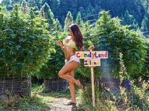 Marijuana porn