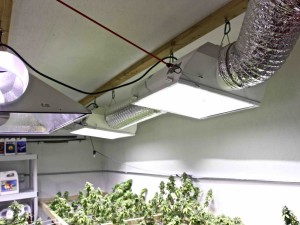 marijuana grow lights