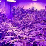 The Only LED Grow Lights for Marijuana… Money, Warranties, Extracts