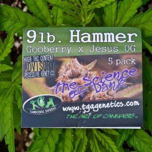 marijuana seed breeding
