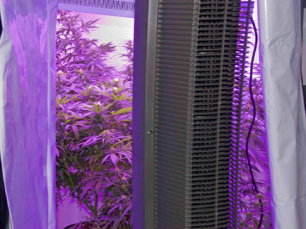 indoor grow room