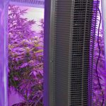 Making a Cheap Indoor Grow Room for Marijuana