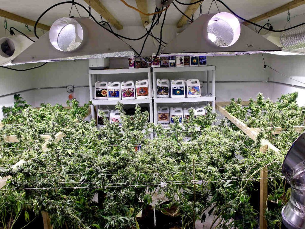 indoor marijuana growing