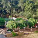 Subcool Hits Up The Emerald Triangle For An Outdoor Monster Marijuana TGA Garden Tour