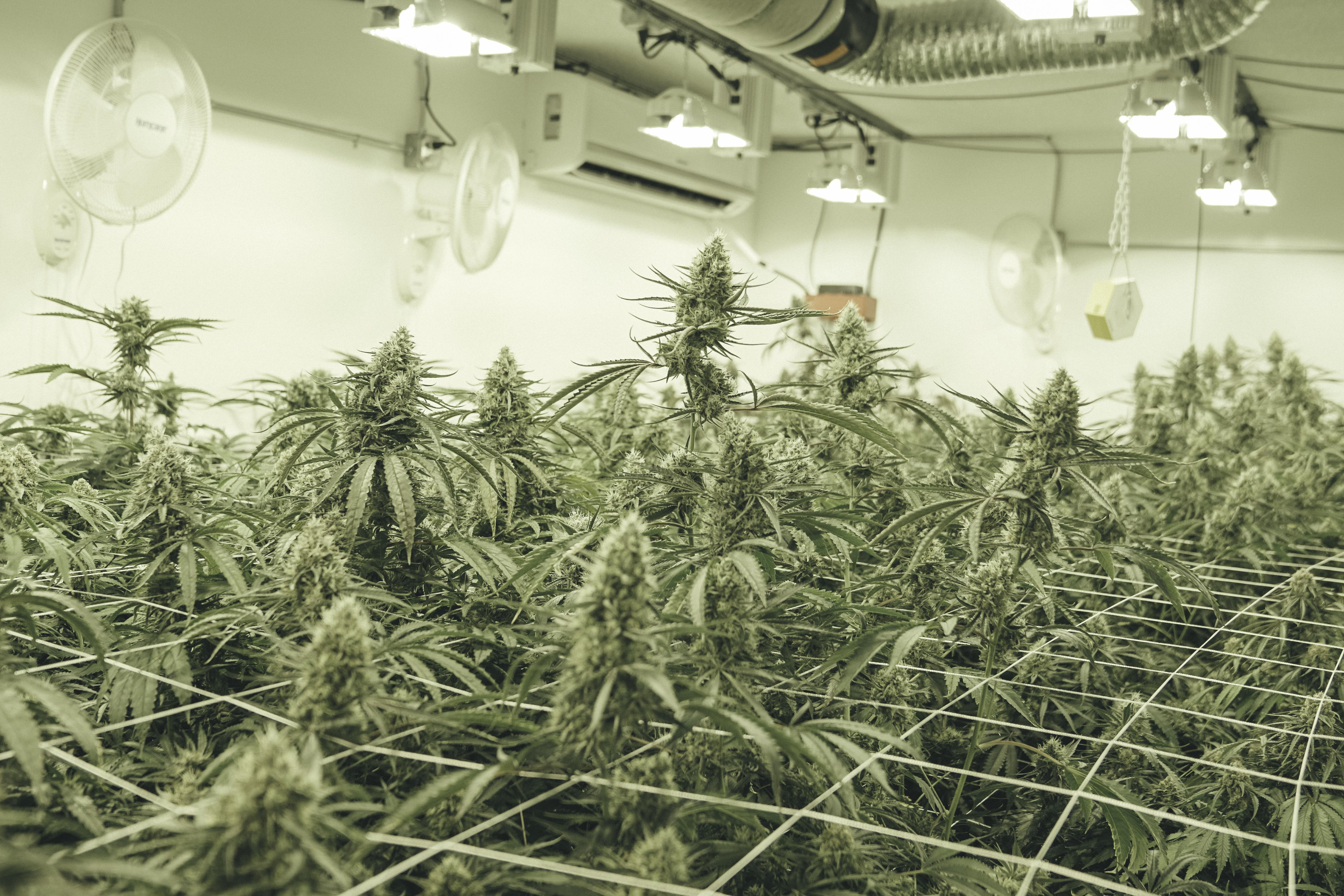 Extra fans will help remove any excess moisture in your grow room and reduce the risk for mold.