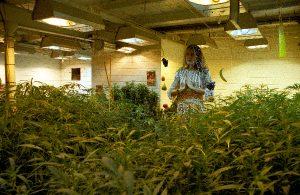 Cannabis Castle