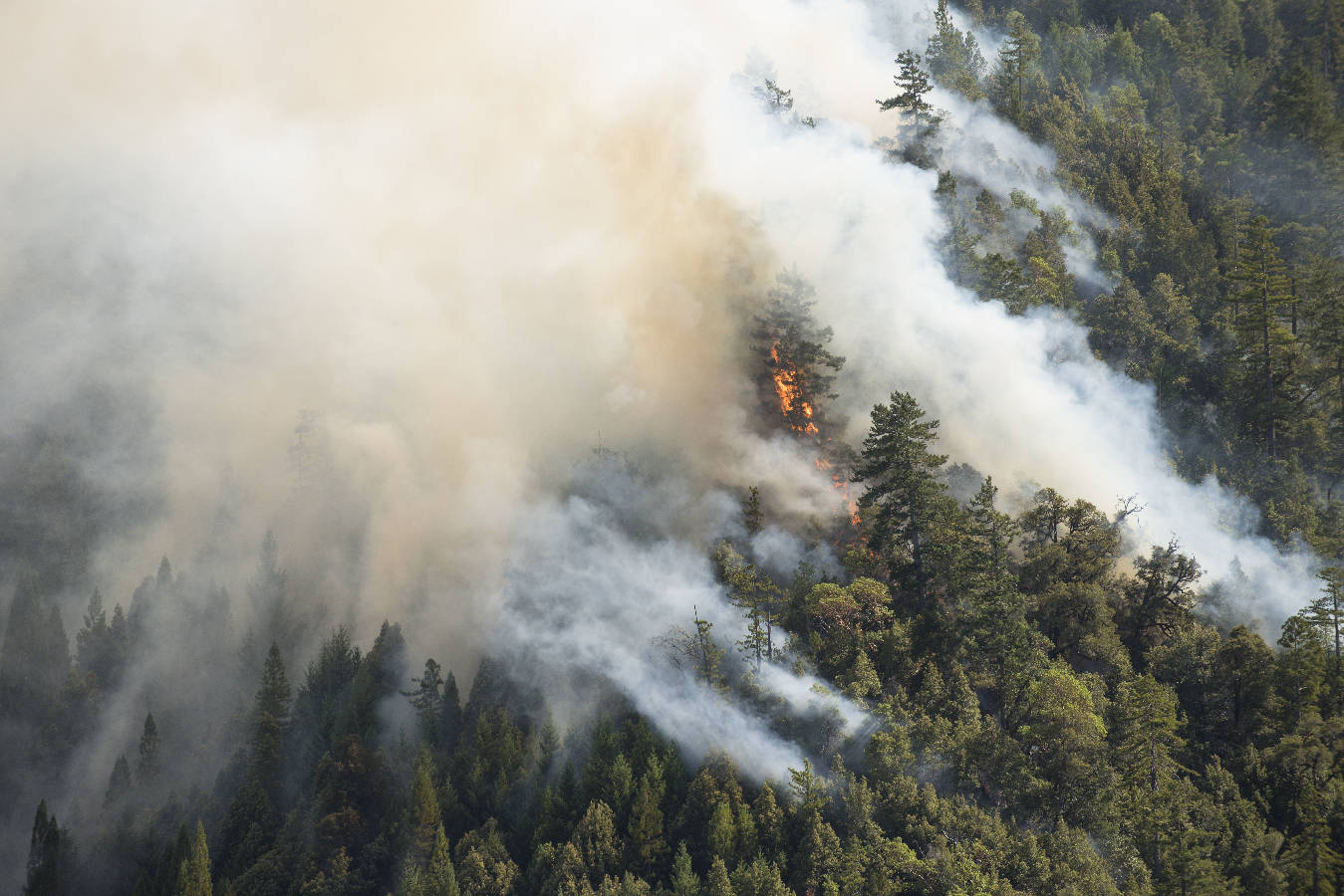 Forest_fire_Mendocino