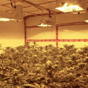 double-ended-grow-lights-for-bigger-yields