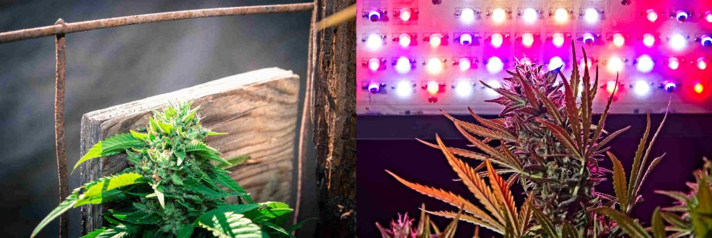 low-cost-low-tech-marijuana-growing