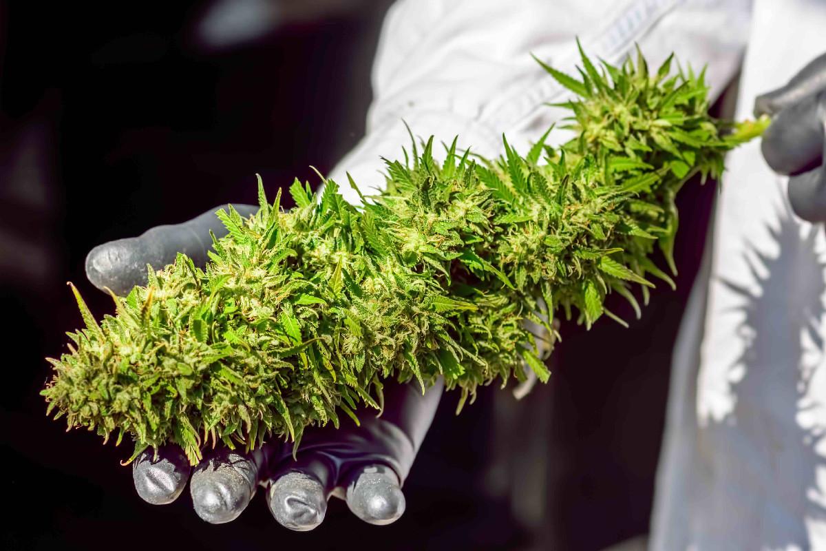 Tilray medical marijuana