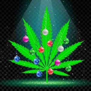 Christmas tree cannabis
