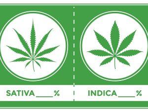 indica_sativa_cannabis_marketing.jpg