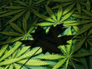 Canada cannabis activists