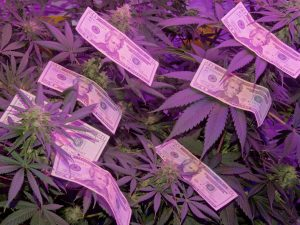 Cannabis Return on Investment