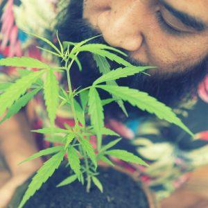 California legal cannabis diversity
