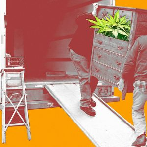 From Taxation To Overzealous Cops, How Will Black Market Growers Survive Legalization?
