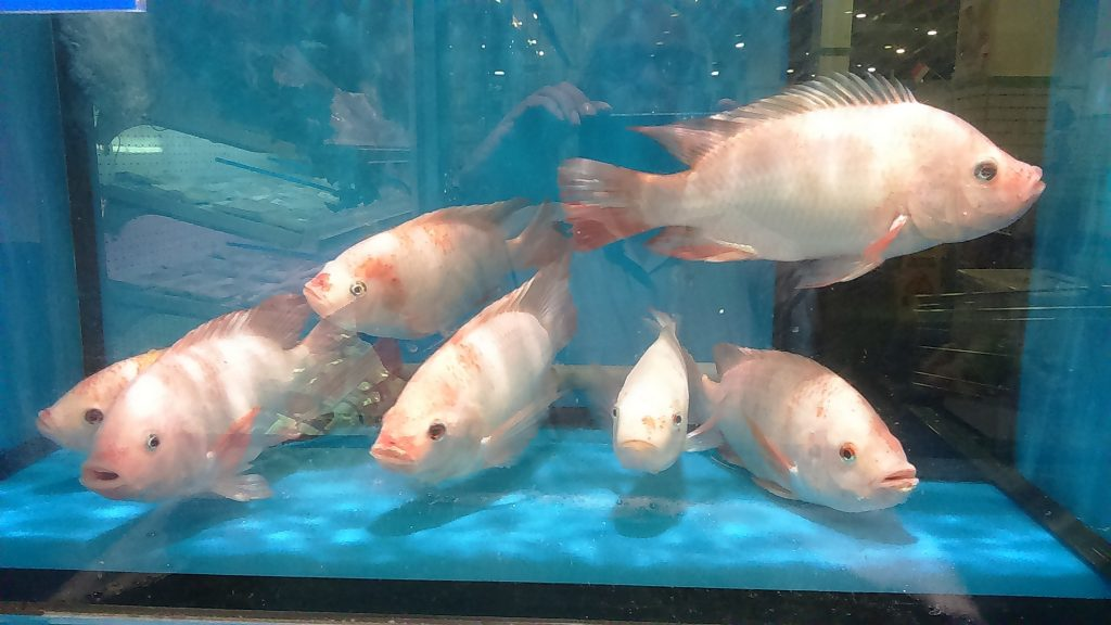 Freshwater fish like tilapia are a popular choice for aquaponics systems because they thrive in densely populated environments.