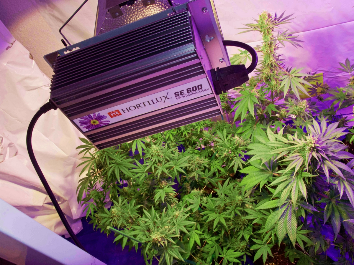 Hortilux grow lights for marijuana growers