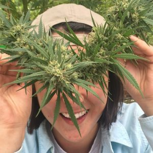 health-and-wellness-for-cannabis-trimmers