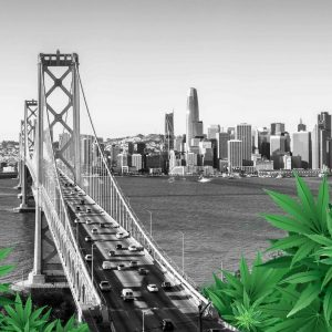 cannabis sanctuary cities