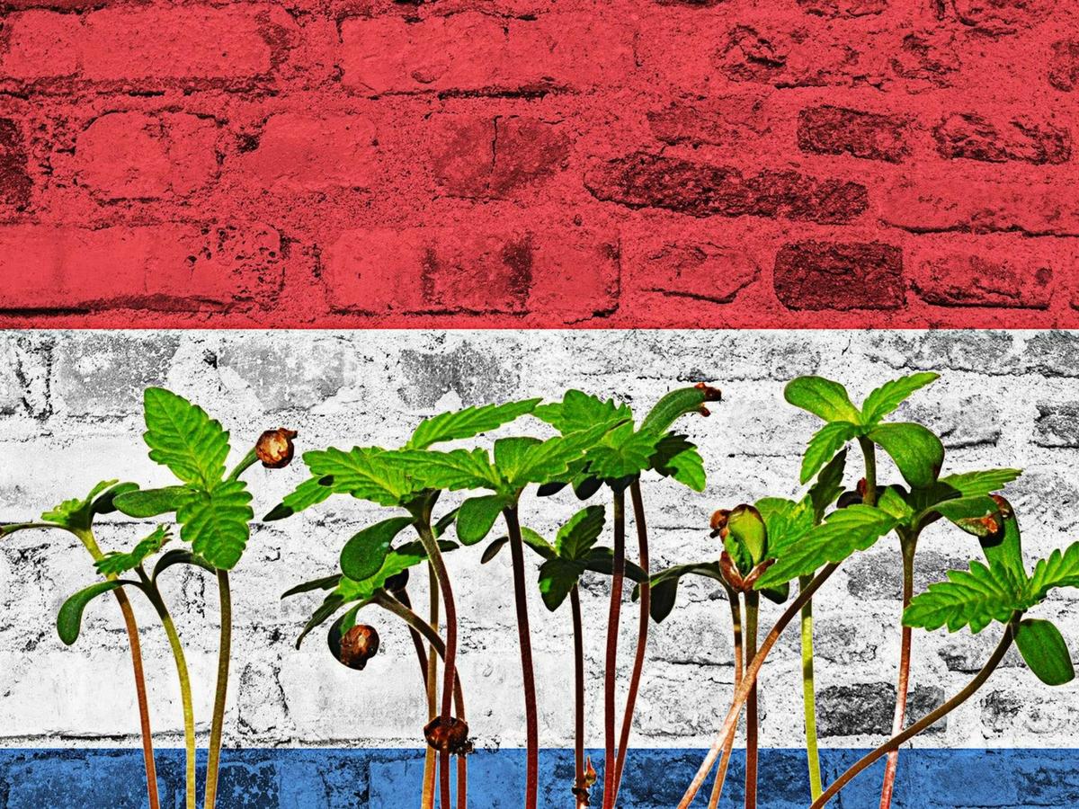 dutch flag and cannabis