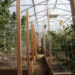 proper-ventilation-for-cannabis-greenhouse-grow-room
