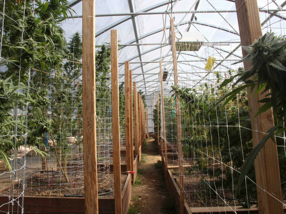 Why Ventilation In Greenhouses & Grow Rooms Is So Important