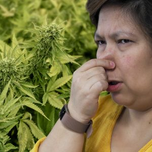Sweet Smell Of Success: Residents In Legal Cannabis States In A Stank Over Dank